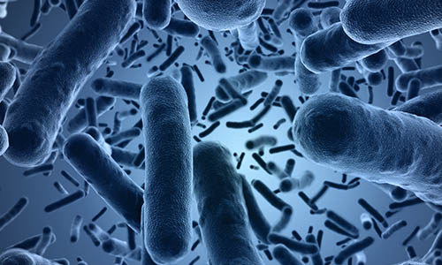 Other Pathogens